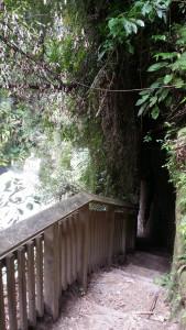 Hinemoa's Steps